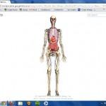 Zygotebody.com,  navega por el cuerpo humano